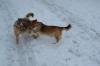 Igra u snijegu
